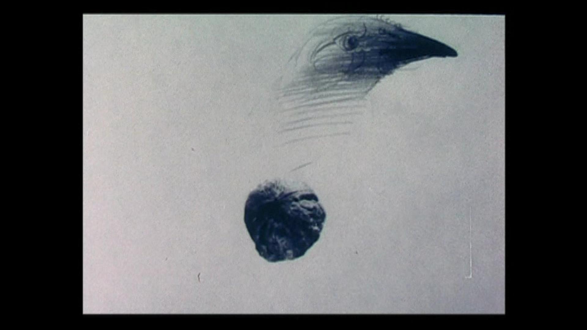 Nuca și zidul (1990)